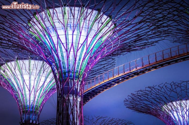 Immagine Supertrees a Gardens by the bay Singapore