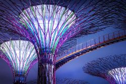 Supertrees a Gardens by the bay Singapore