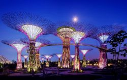 Singapore la foresta dei Supertrees Grove a Gardens by the Bay