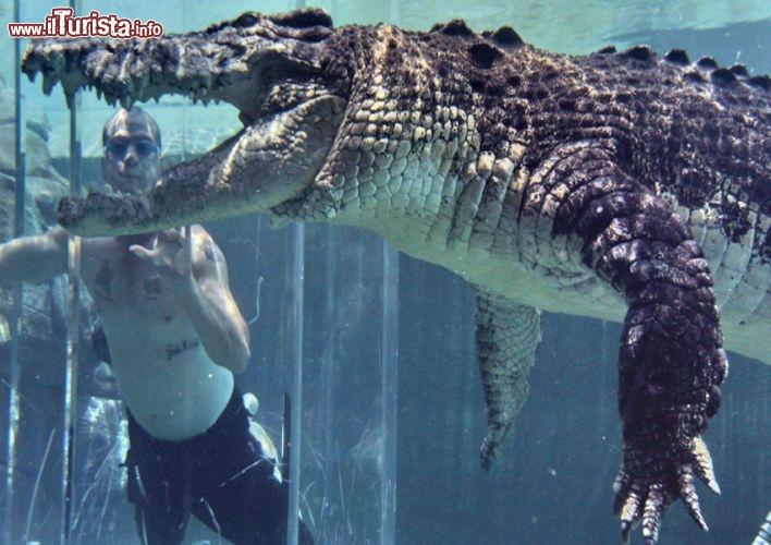 Cosa vedere e cosa visitare Crocosaurus Cove