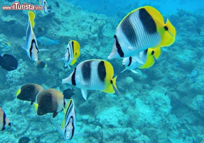 Pesci colorati durante una immersione nella magica laguna - Foto di animali dell oceano ...
