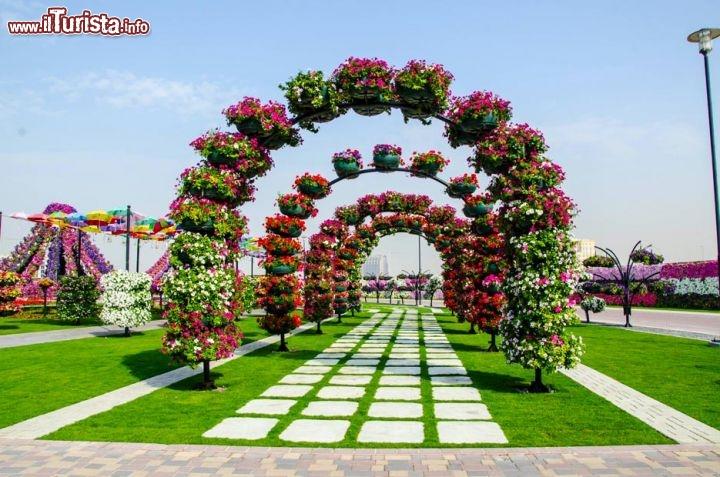 Oltre 45 milioni di fiori tra cui tantissime vaiet di petunie guarda tutte le foto for Puglia garden city ny