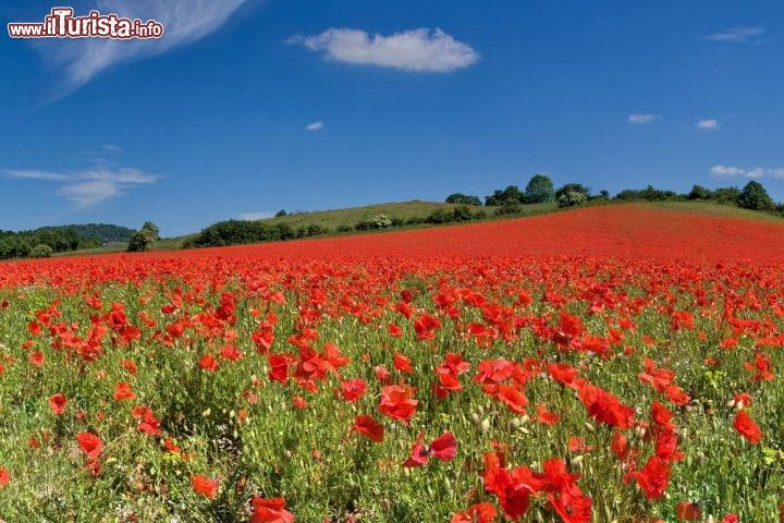 Molto Sconfinato campo di papaveri nel Worcestershire, Inghilterra  UK04