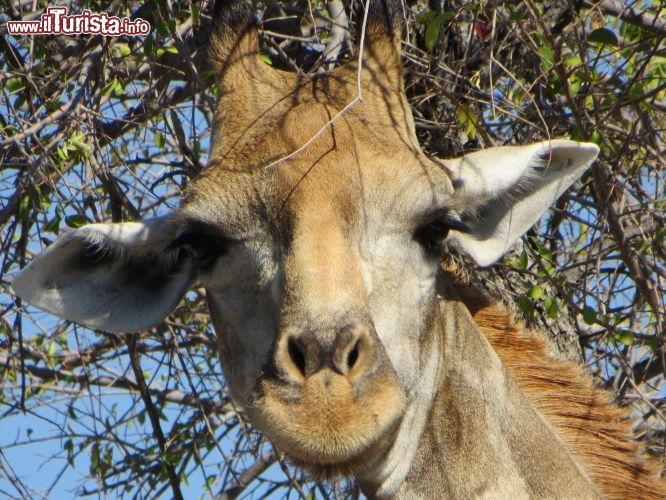 Le foto di cosa vedere e visitare a Namibia