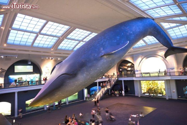 Cosa vedere e cosa visitare American Museum of Natural History