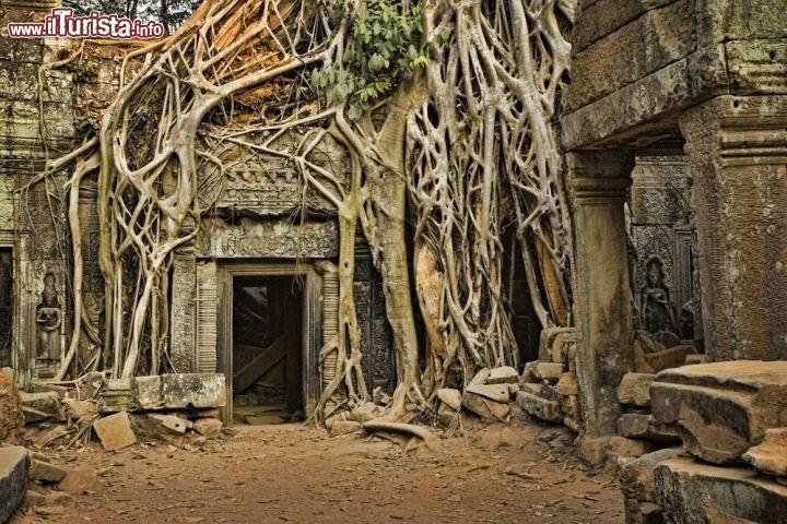 Ta Prohm Angkor Wat Cambogia foto 75696943