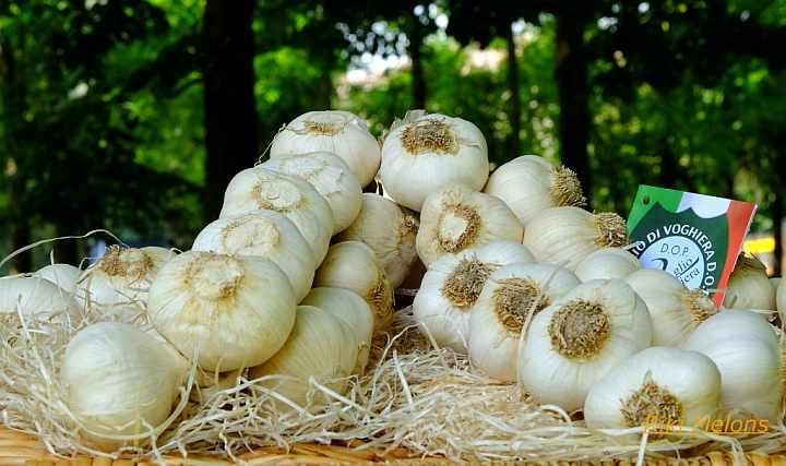 Fiera dell'aglio Voghiera