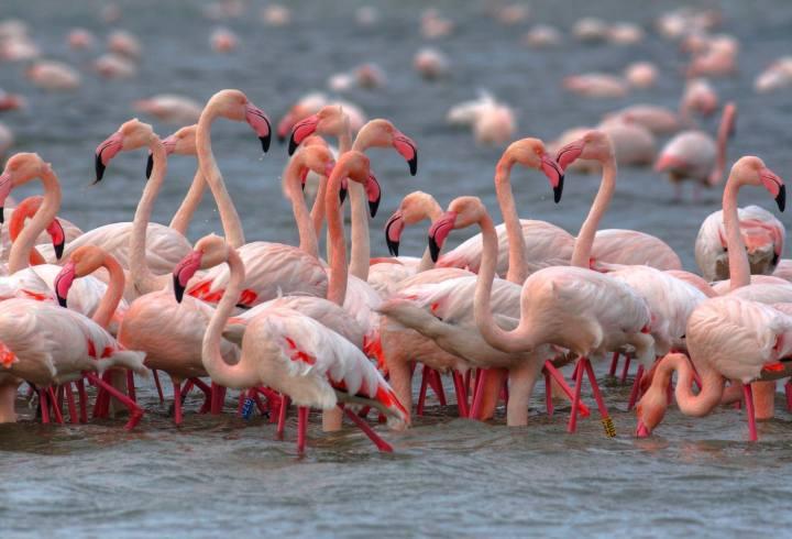 Fiera Internazionale del Birdwatching e del Turismo Naturalistico Comacchio