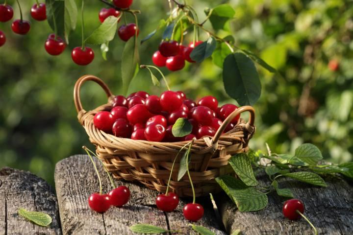 La Maggiolata, Sagra delle ciliegie Raiano
