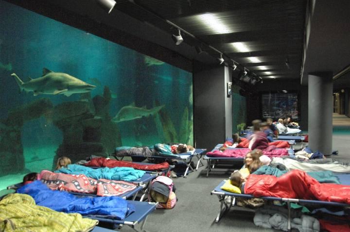 Notte con gli squali Genova