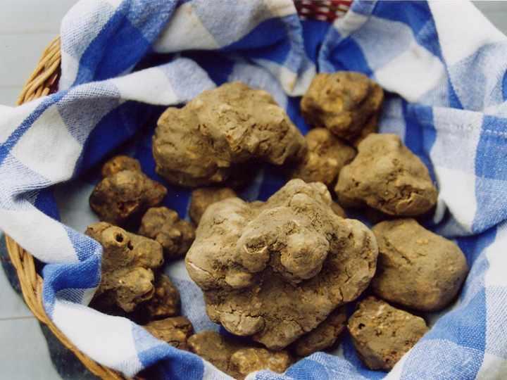 Mostra Mercato del tartufo e della patata bianca Pietralunga