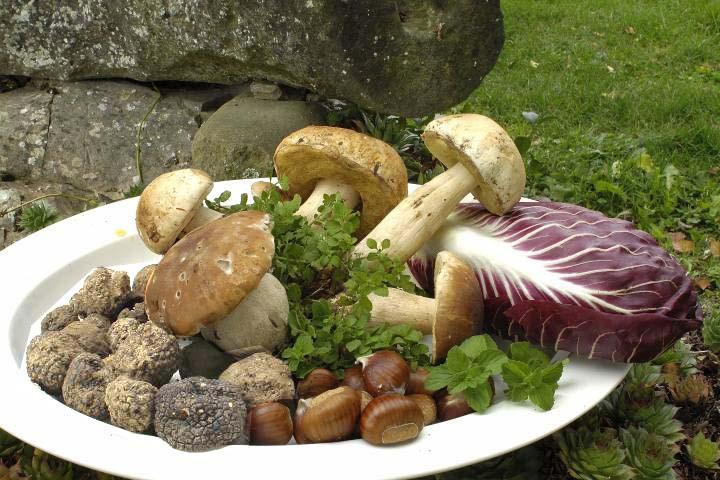 Sagra del tartufo bianco e del fungo Balconevisi