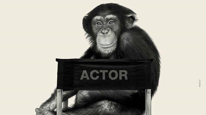 Bestiale! Animal film stars Torino