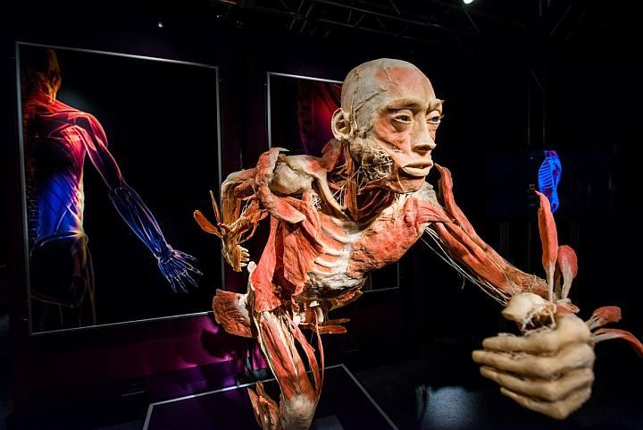 Human Bodies - The Exhibition Torino