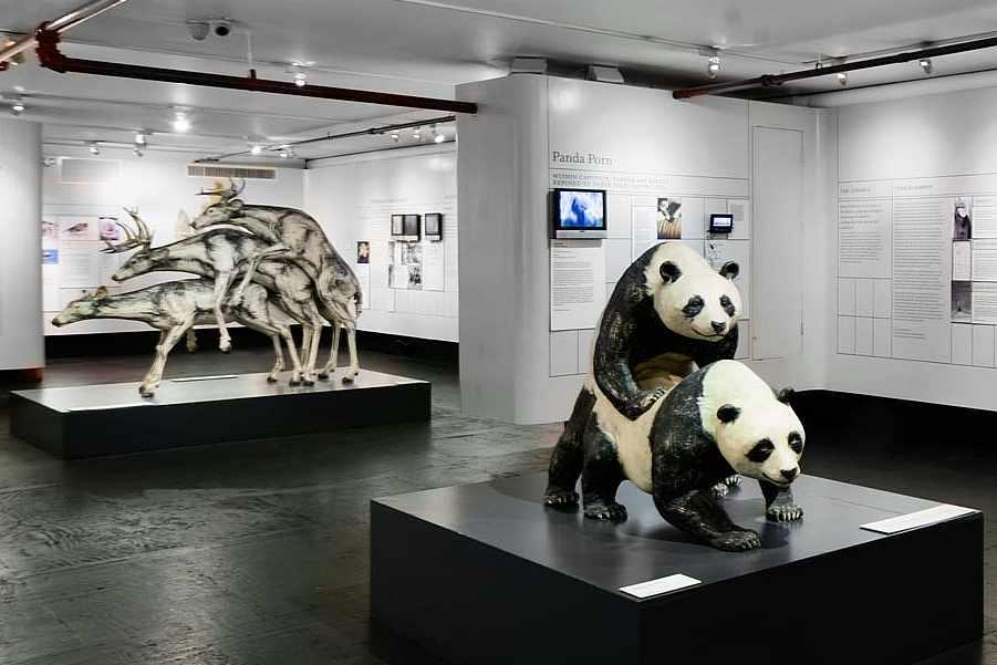 I musei più strani ed originali di New York City