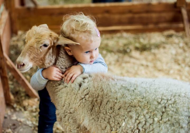 Fattorie didattiche in Trentino, dove andare con i bambini