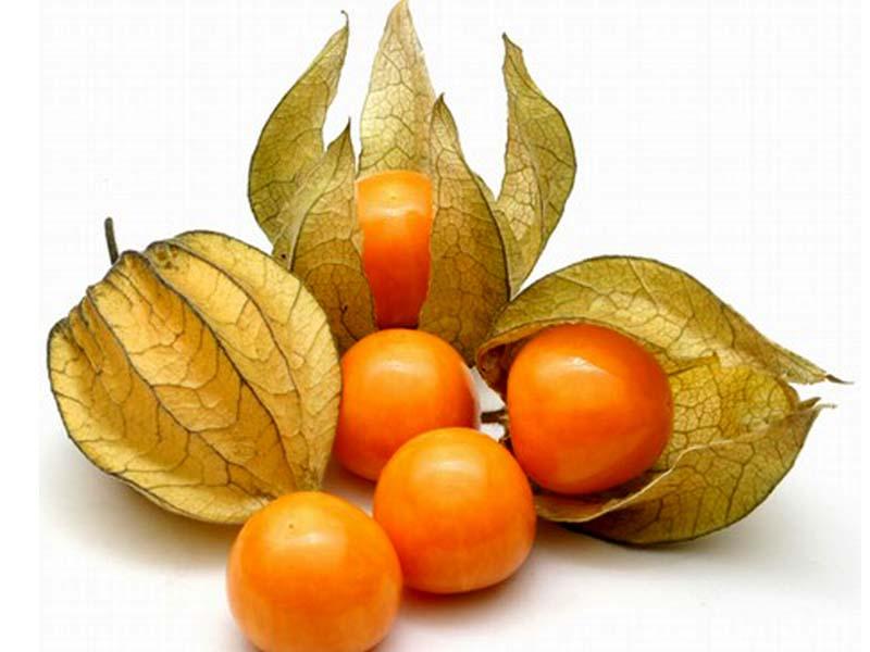 Festa dei Frutti Dimenticati Casola Valsenio